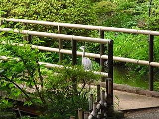 京王百草園松連庵から見えた鷺1.JPG